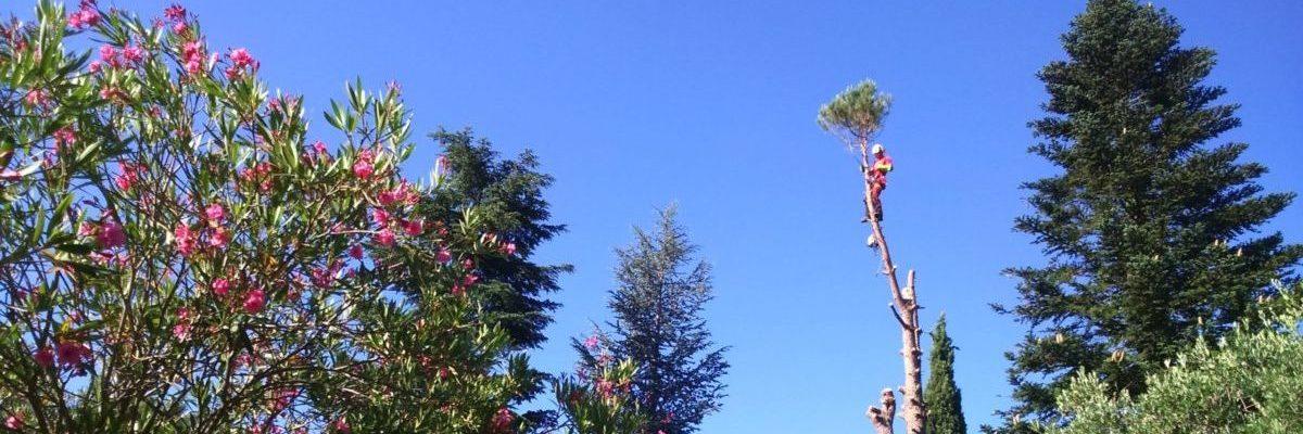 Demontage pin Alep pat techni grimp à Uzes Gard